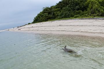 Turtle near Sipadan white sand beach Tropical turquoise paradise