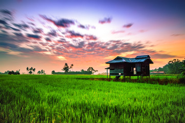 Sunrise at Paddy Field