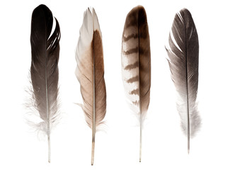 set of four straight feathers isolated on white