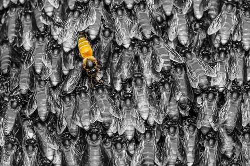 Yellow bee in black  background