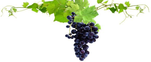 grappe de raisin rouge et feuilles de vigne