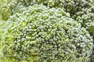 Fresh green broccoli as background