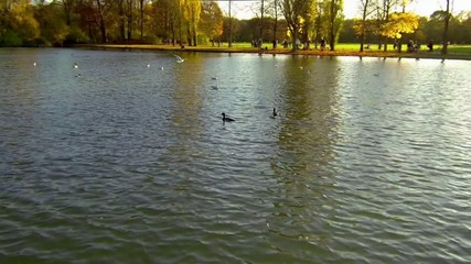 slow-motion clip of flying waterbirds