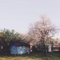 countryside blossom