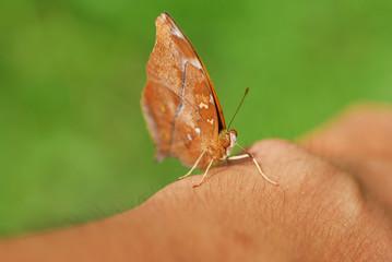 Butterfly on wrist
