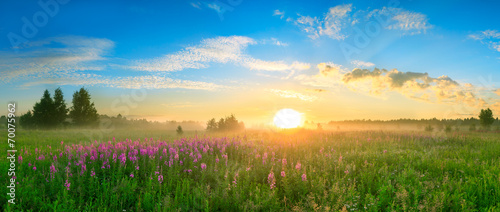 Poster Oceanië landscape with the sunrise, a blossoming meadow panorama