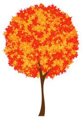 autumn season maple tree design