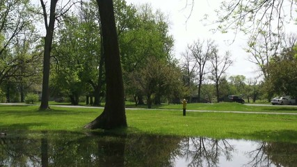 Public Park, Trees, Grassy Area, Flooding