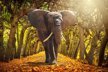 Elephant walking on autumnal alley in the park