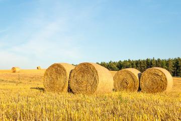 Haystacks in the field