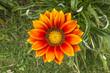 Flower on mount Bromo