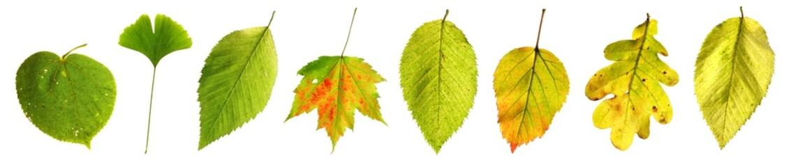 Blätter von grün bis grün-gelb