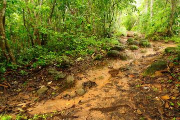 Muddy jungle path in Panama