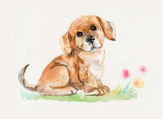 Puppy sitting. Puppy background