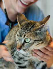 visite chez la vétérinaire