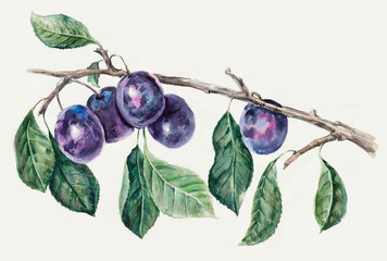 Branch with a plums. Pattern from plums.