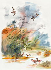 Autumn landscape. Sandpipers go on water.