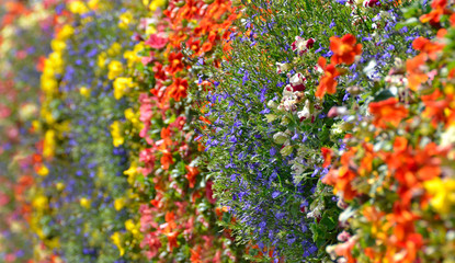 Colorful wild flowers decoration