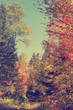 Autumn forest vertical vintage