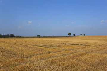 golden stubble under blue sky