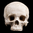 canvas print picture - Human skull model