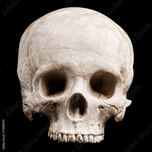 canvas print picture Human skull model