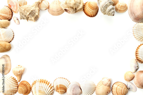 frame of conch sea shells - 70089341