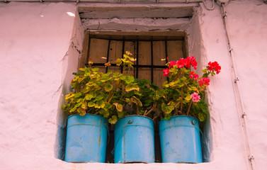 Macetas en ventana