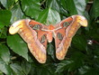 canvas print picture - Schmetterling/Butterfly groß