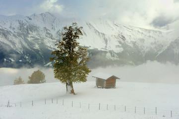 Szwajcaria , Alpy, Axalp