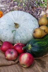 pumpkins and other harvest seasonal vegetables