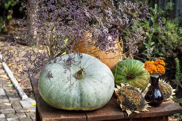 pumpkins and other harvest seasonal vegetables