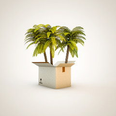palms in a box