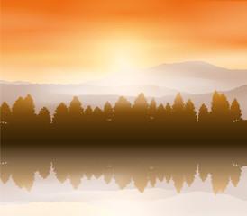 Forest landscape background