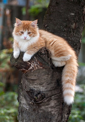 Kitten sitting in a tree