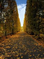 Jesień w parku, Gdańsk Oliwa, parkowa alejka