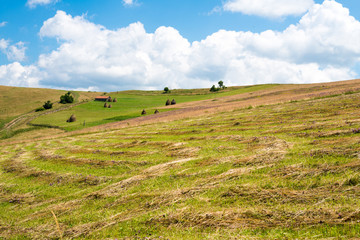 The mown grass on the slope in the Ukrainian Carpathians