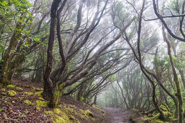 Rain Forest in Tenerife