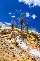 Scenic view of geothermal land and dry trees in Yellowstone NP