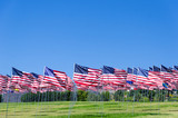 American flags on a field - 70105151