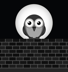 Monochrome night owl perched on brick wall
