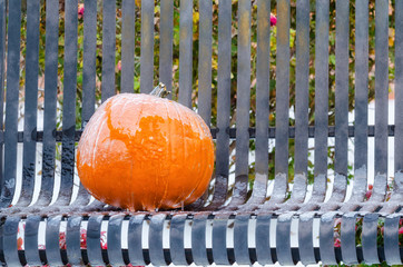 Pumpkin covered with ice on a garden bench