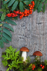 Orange Birch Bolete (Leccinun versipelle) mushroom