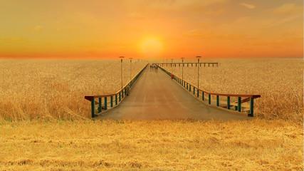 bridge over the sea of wheat