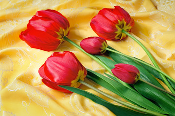 Bright red tulip against yellow silk