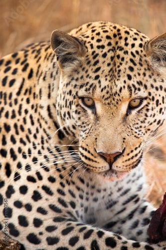 Fotobehang Luipaard Occhi di ghiaccio Leopardo