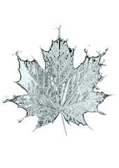 Leaf of a maple from water