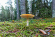 Yellow mushroom at the forest floor