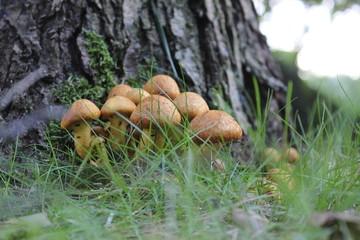Wunderschöne leckere Pilze in warmer Herbst Sonne