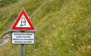 achtung murmeltiere!